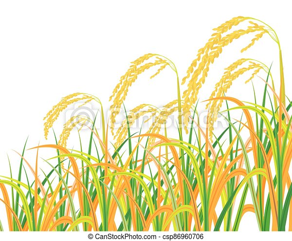 isolated rice plant on white background vector design - csp86960706