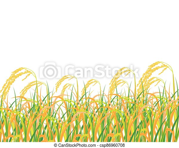 isolated rice plant on white background vector design - csp86960708