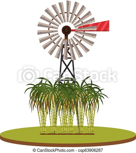 Isolated sugarcane plant on white background - csp63906287