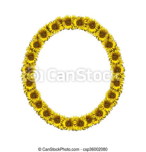isolated sunflower alphabet o sunflower alphabet isolated on white