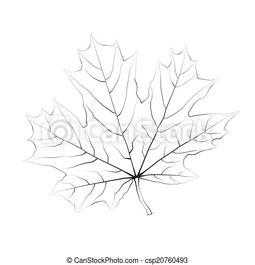 Isolated vector monochrome maple leaf. - csp20760493