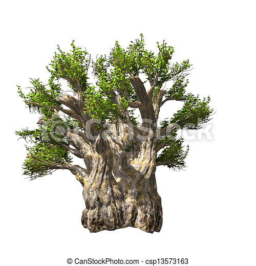 isolated., vektor, baobab kopyto, ilustrace - csp13573163