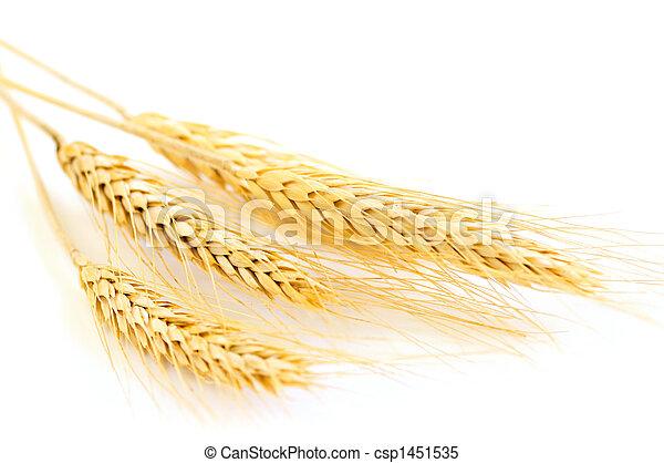 Isolated wheat ears - csp1451535