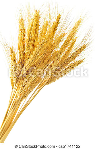 Isolated wheat ears - csp1741122