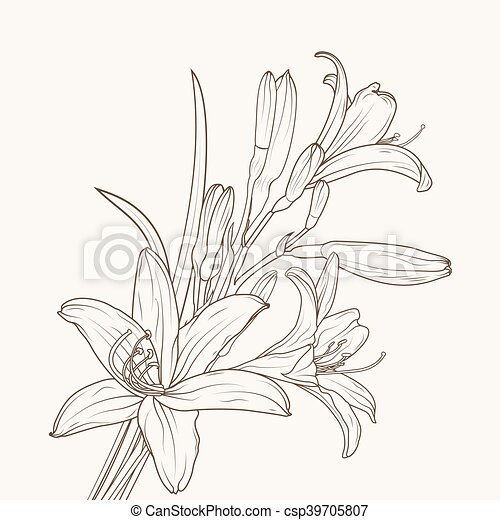 Isolated white lily flower csp39705807