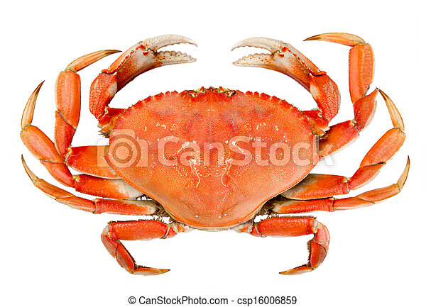 Isolated Whole Dungeness Crab - csp16006859
