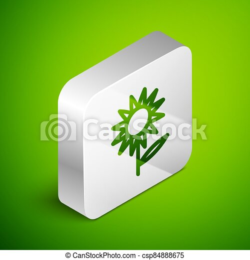 Isometric line Sunflower icon isolated on green background. Silver square button. Vector - csp84888675