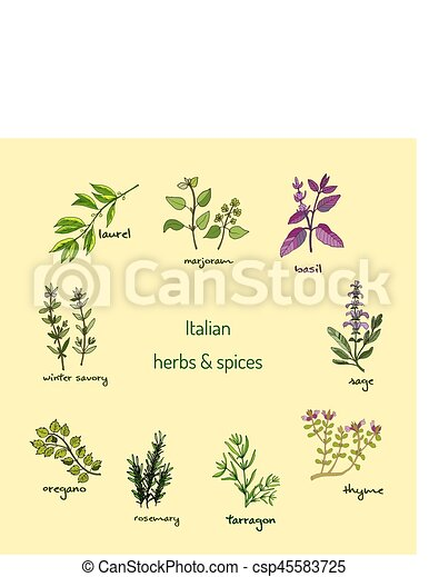 Italian herbs and spices - csp45583725