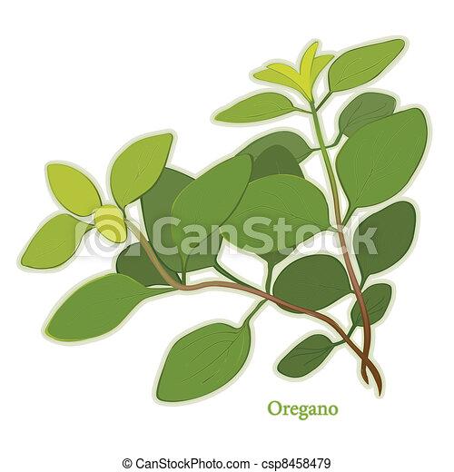 Italian Oregano Herb - csp8458479