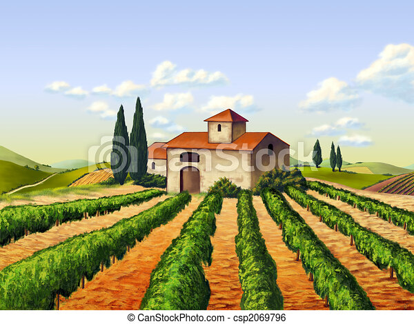 Italian vineyard - csp2069796