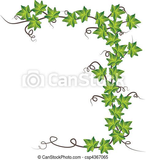 ivy., וקטור, ירוק, דוגמה - csp4367065