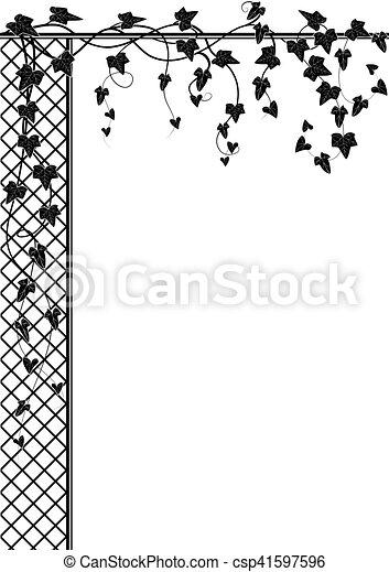 ivy and lattice - csp41597596