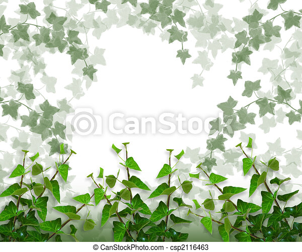 Ivy Border, background or Frame - csp2116463