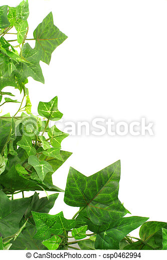 ivy border botanical green border made of ivy leaves