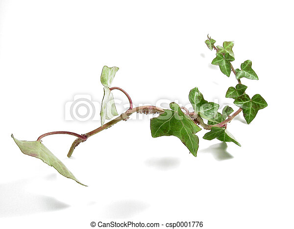 Ivy Cutting - csp0001776