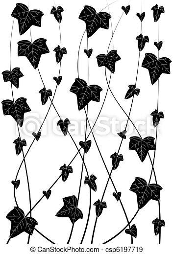 ivy - csp6197719