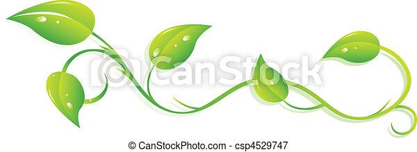 ivy - csp4529747