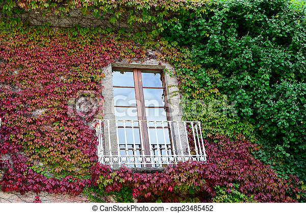 ivy leaves on a wall - csp23485452