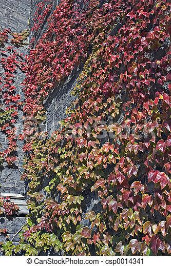 Ivy Wall - csp0014341