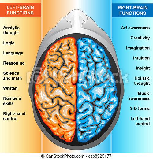 Cerebro humano izquierda y función derecha - csp8325177