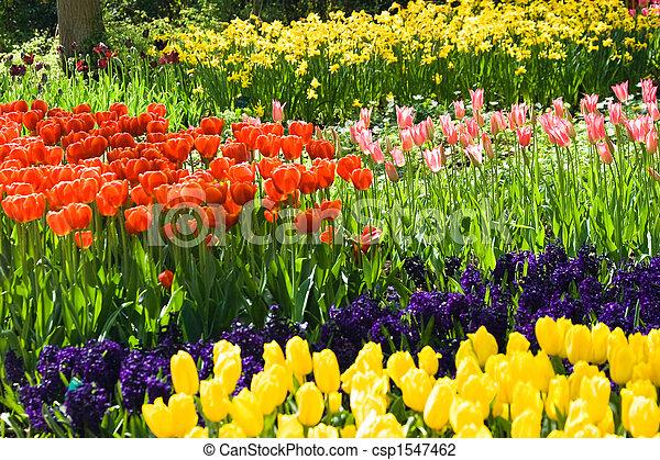 jacintos, narcisos, tulipanes - csp1547462