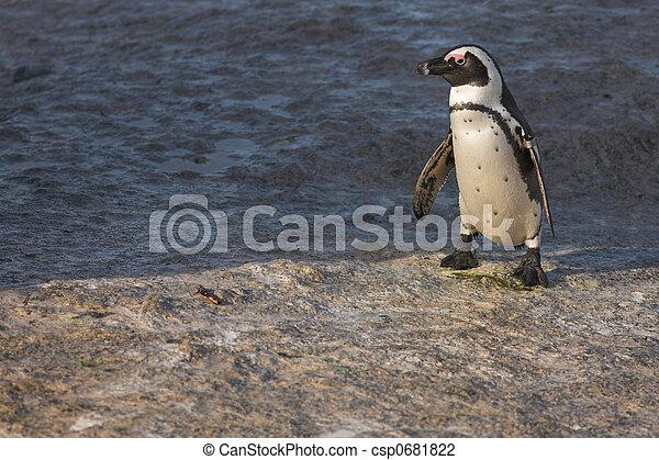 Jackass Penguin #32 - csp0681822