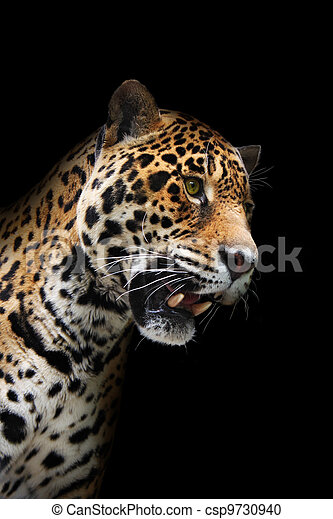 Jaguar head in darkness, isolated - csp9730940