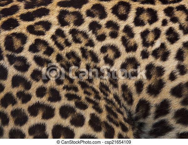 Jaguar, leopard and ocelot skin texture - csp21654109