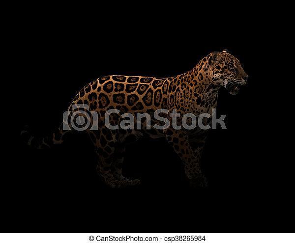 Jaguar Panthera Onca In The Dark Csp38265984