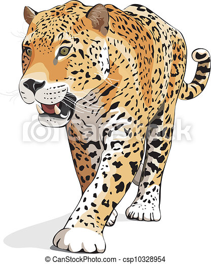 jaguar vector isolated on white jaguar wild cat panther vector rh canstockphoto com jaguar clipart logo jaguar clipart logo