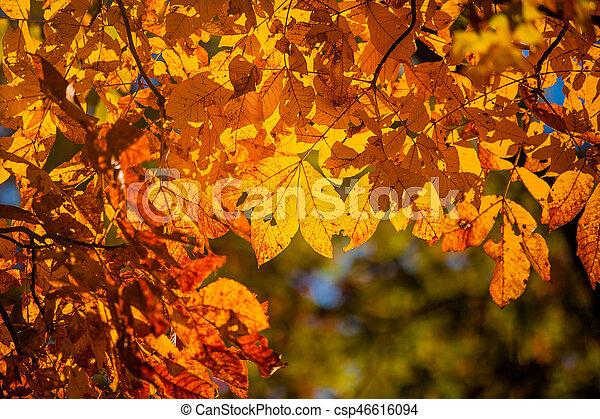 Herbst Jahreszeit