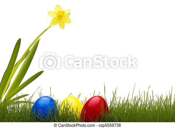 jaja, żonkil, trzy, tło, biały, trawa, wielkanoc - csp5559738