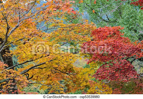 Japanese Autumn Color Leaves Of Maple Trees Autumn Color Leaves