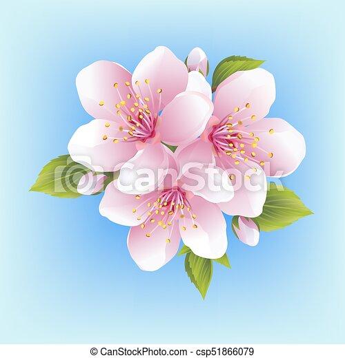 Japanese Cherry Blossom Isolated Beautiful White Pink Sakura