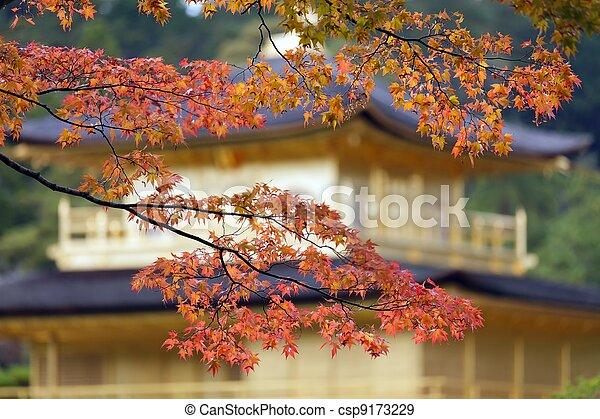 japanese fall colors - csp9173229