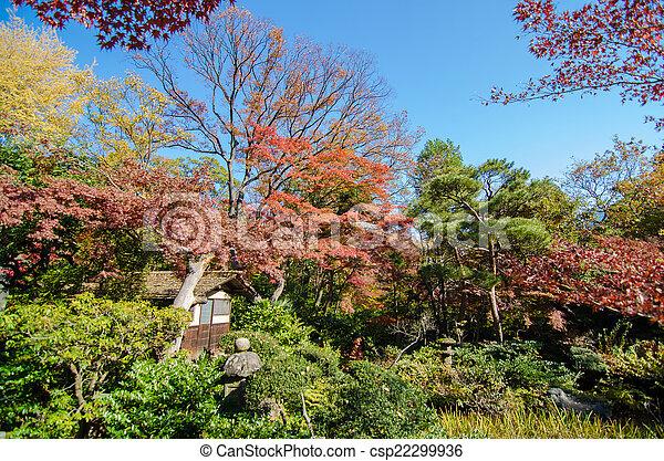 Japanese Garden with Maple, Tokyo, Japan - csp22299936