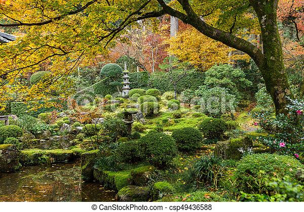 Japanese garden with maple tree - csp49436588