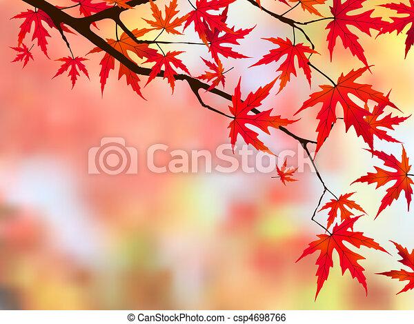 Japanese maple. - csp4698766