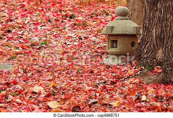 Japanese Maple Leaves - csp4968751
