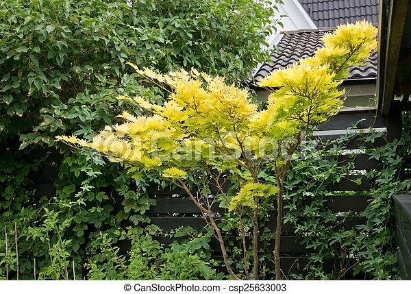 Japanese maple leaves - csp25633003
