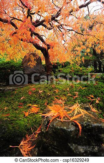 japanese maple - csp16329249