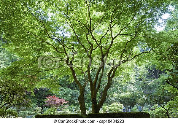 Japanese maple - csp18434223