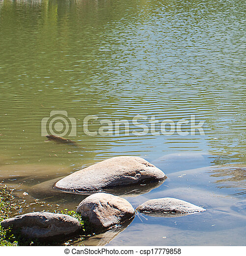 Japanese pond with carps and stones - csp17779858