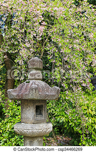 Japanese Stone Lantern Under Sakura Cherry Blossom Trees With Pink