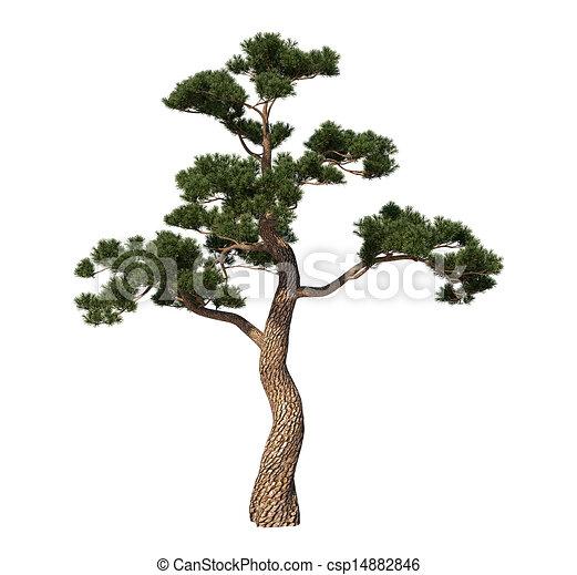 Japonsko Strom Borovice Strom Borovice Prostredi Venku