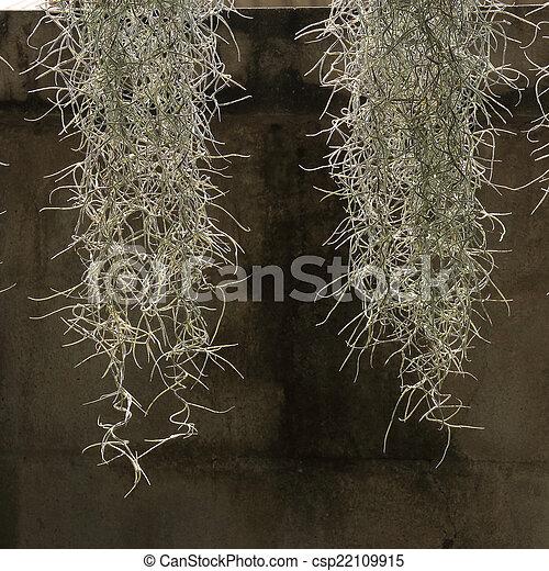 Jardín decorado con musgo español - csp22109915