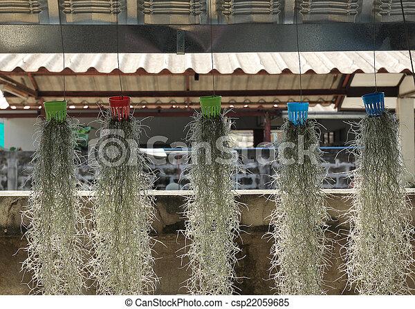 Jardín decorado con musgo español - csp22059685