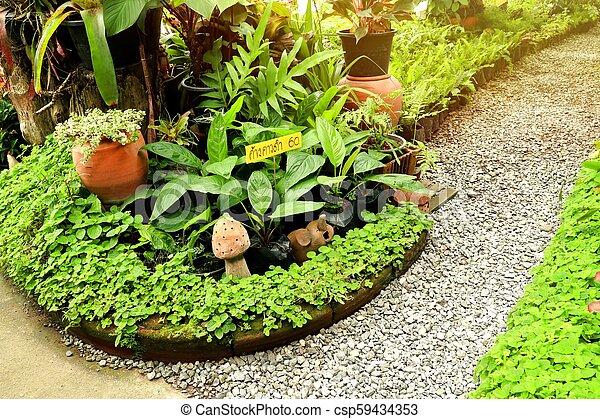Camino en el jardín - csp59434353