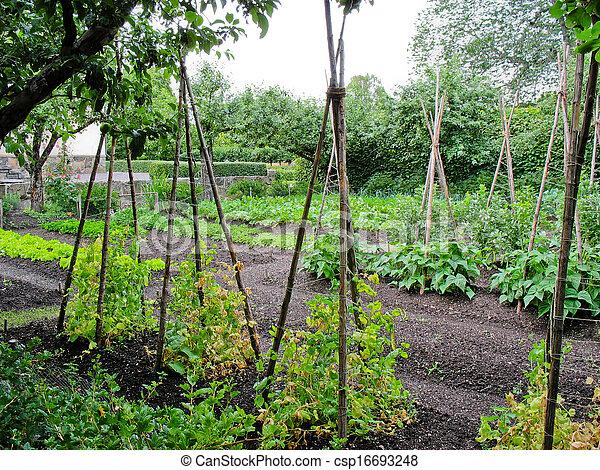 Jardín vegetal - csp16693248