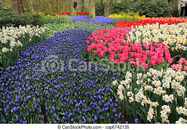 jardínes de flores, cama, keukenhof - csp6742135